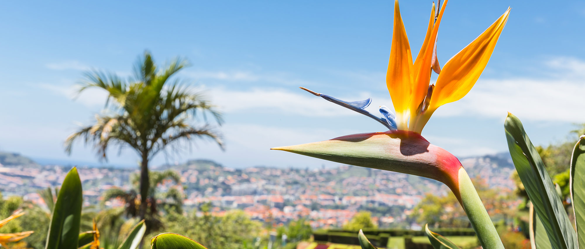 Bird of Paradise plant with view in distance
